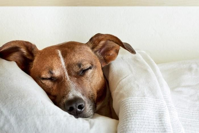 Resultado de imagen para mascotas en la cama