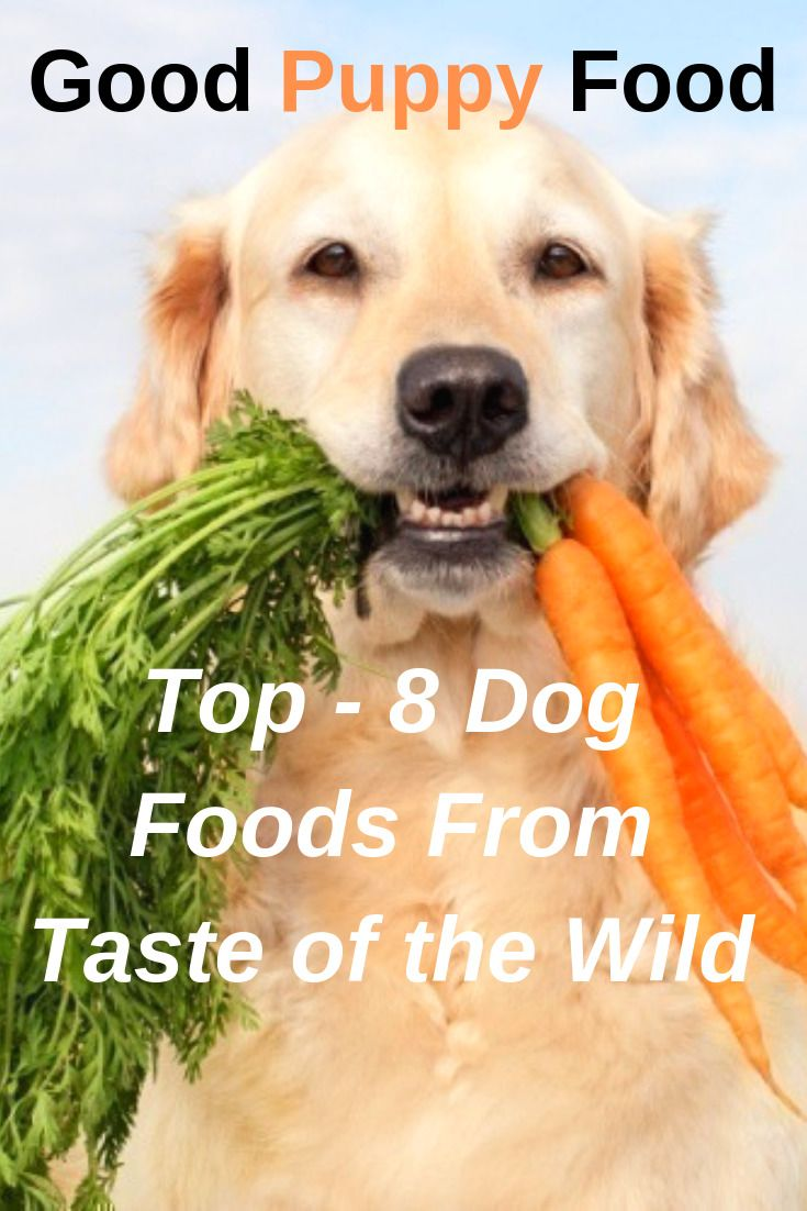 Taste of the wild best puppy food dog food reviews dog