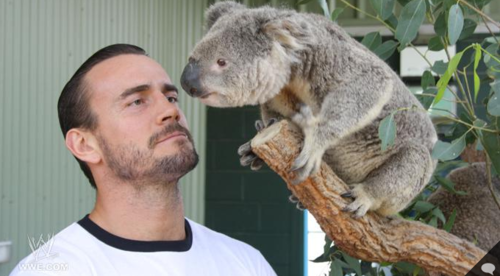 CM Punk & A Koala... whats not to love?