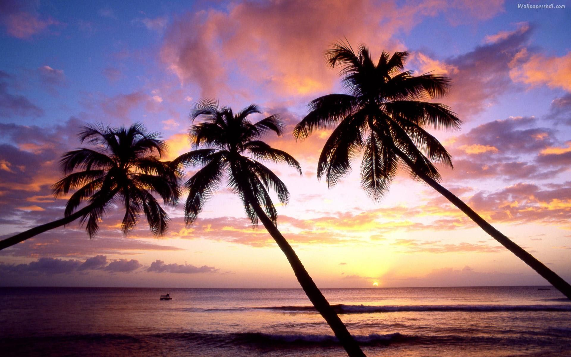 Wallpaper Palm Tree Android Apps on Google Play Epic