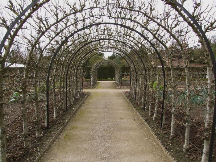 Favorites: Espaliered Fruit Trees