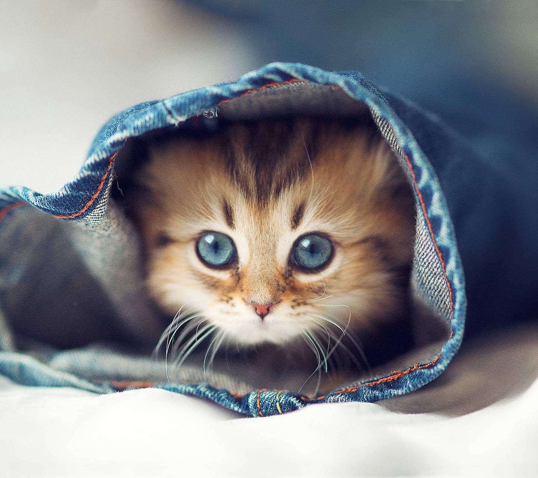 Cute Kitten Kittens Cutest Beautiful Kittens Cute Animals
