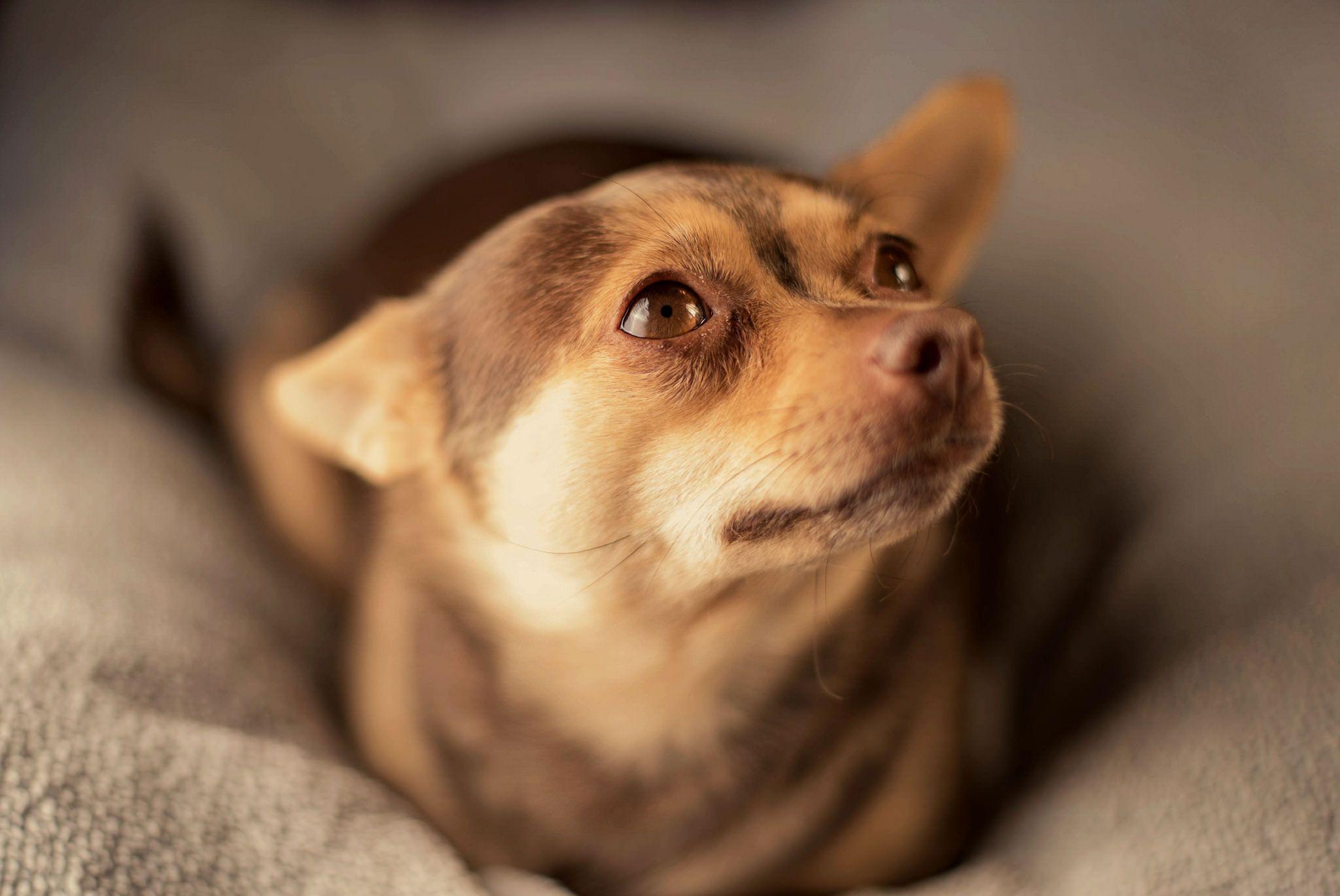 Innocent cute puppy iftfifhiv cute puppies pinterest