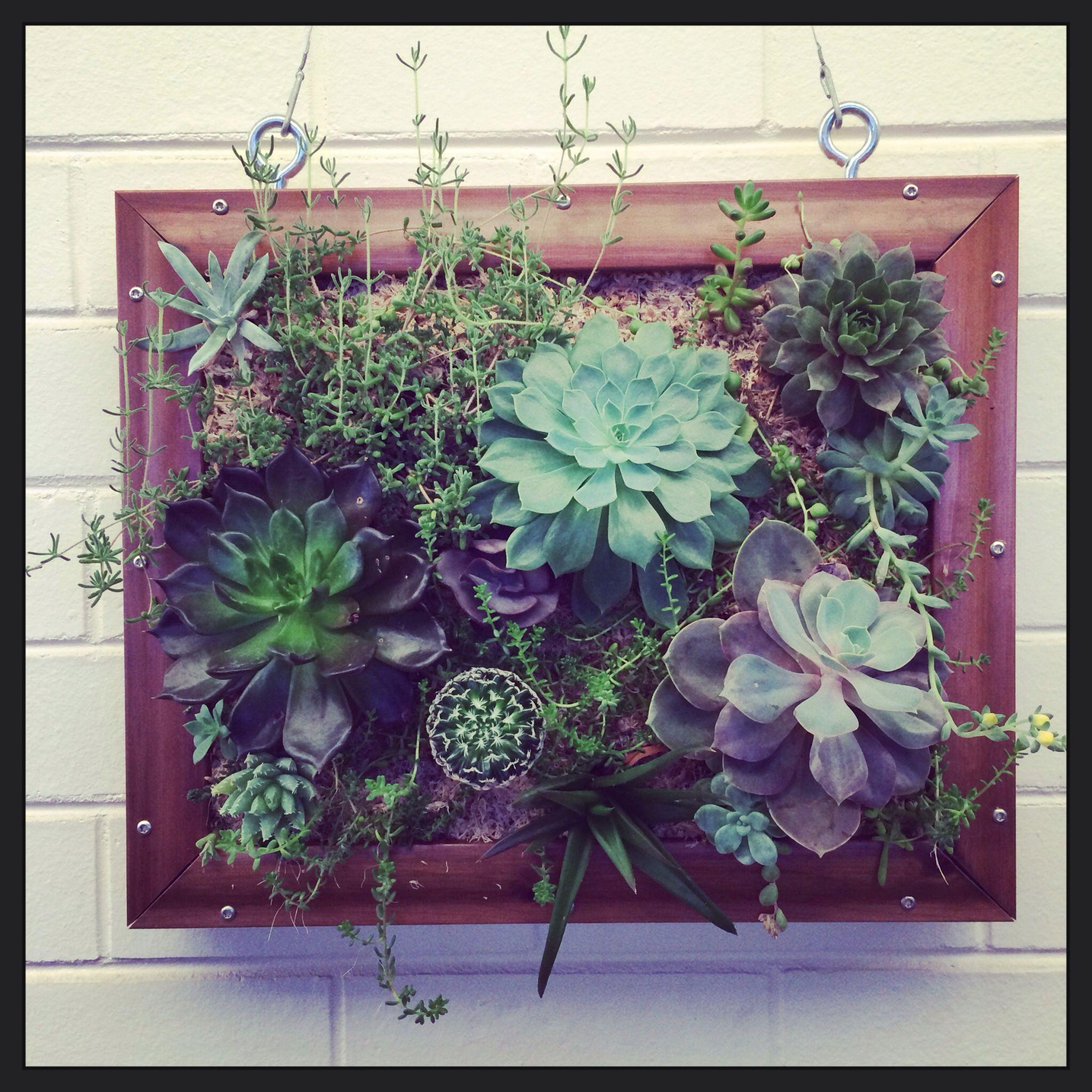 Living Wall Art  Succulents