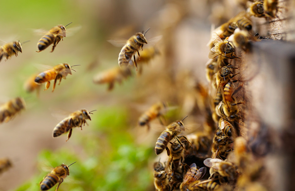 20++ What makes the buzzing sound of a bee inspirations