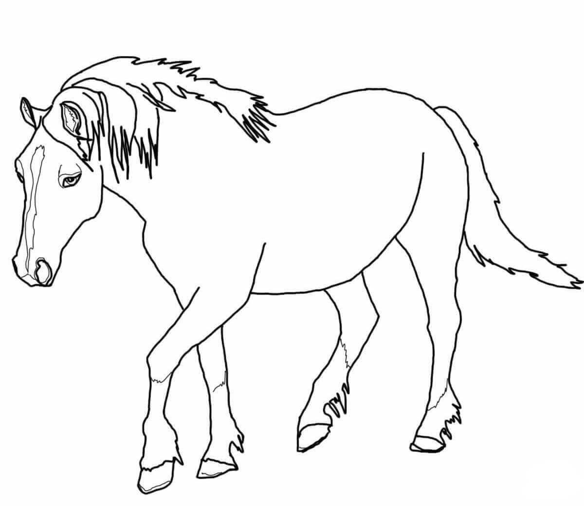 Tennessee Walking Horse Coloring Page Horse Coloring Horse Coloring Pages Horse Coloring Books