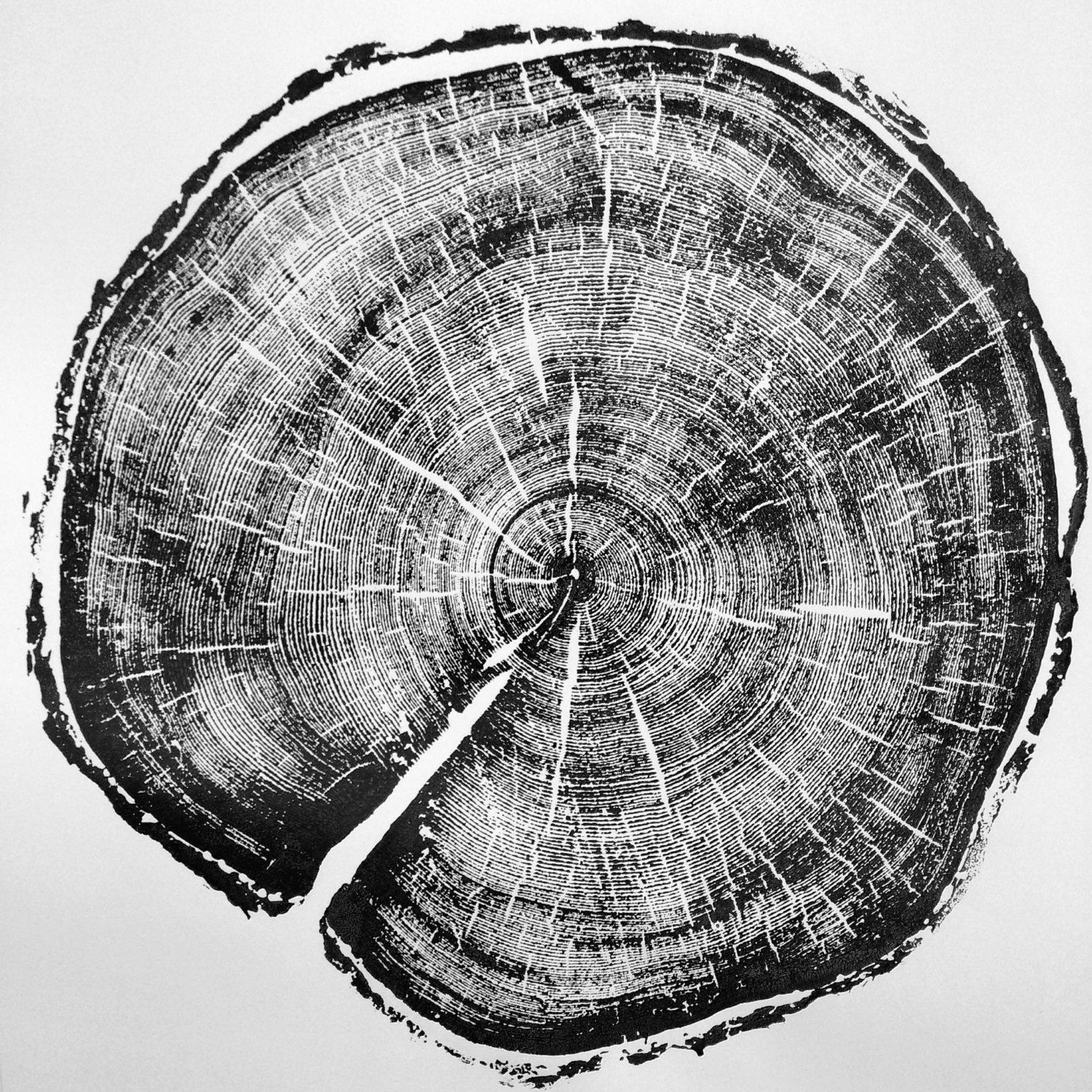 da72515a7f187 183 year old Tree, Tree ring art print, Woodcut print, Uinta Forest ...