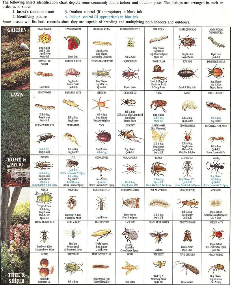 insect-identification-chart | I need this! | Garden insects
