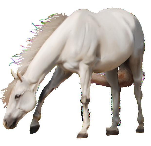 White Horse Png Image Photoshopped Animals Horses White Horse