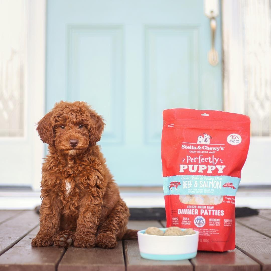 Happy national puppy day sponsored sullivan has been