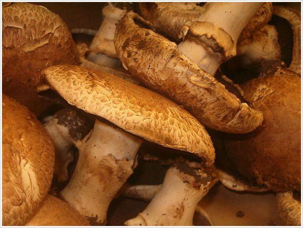 Mushrooms - Repin if your love Mushrooms
