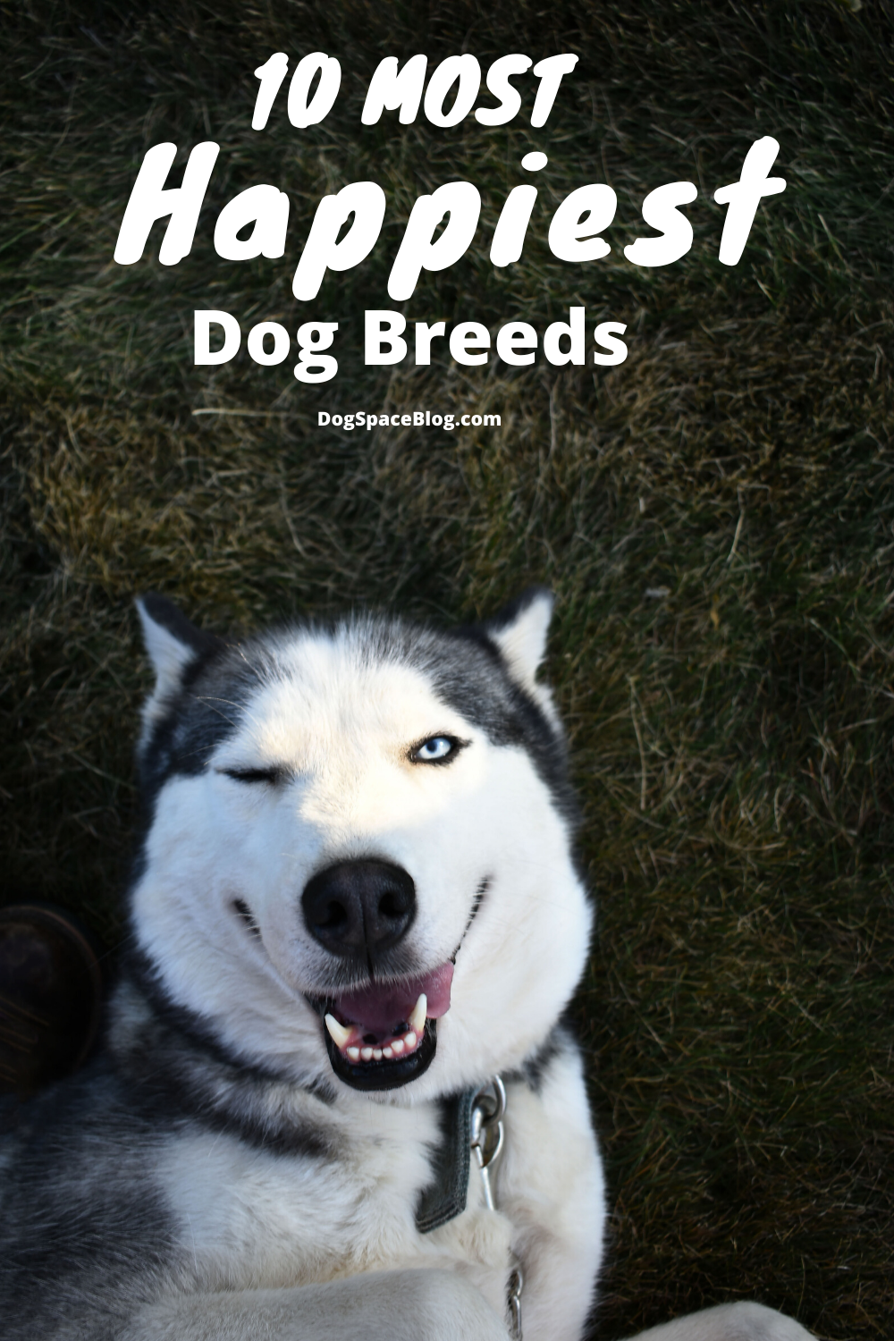 Top 10 Happiest Dog Breeds Happy dogs, Dogs, Dog breeds