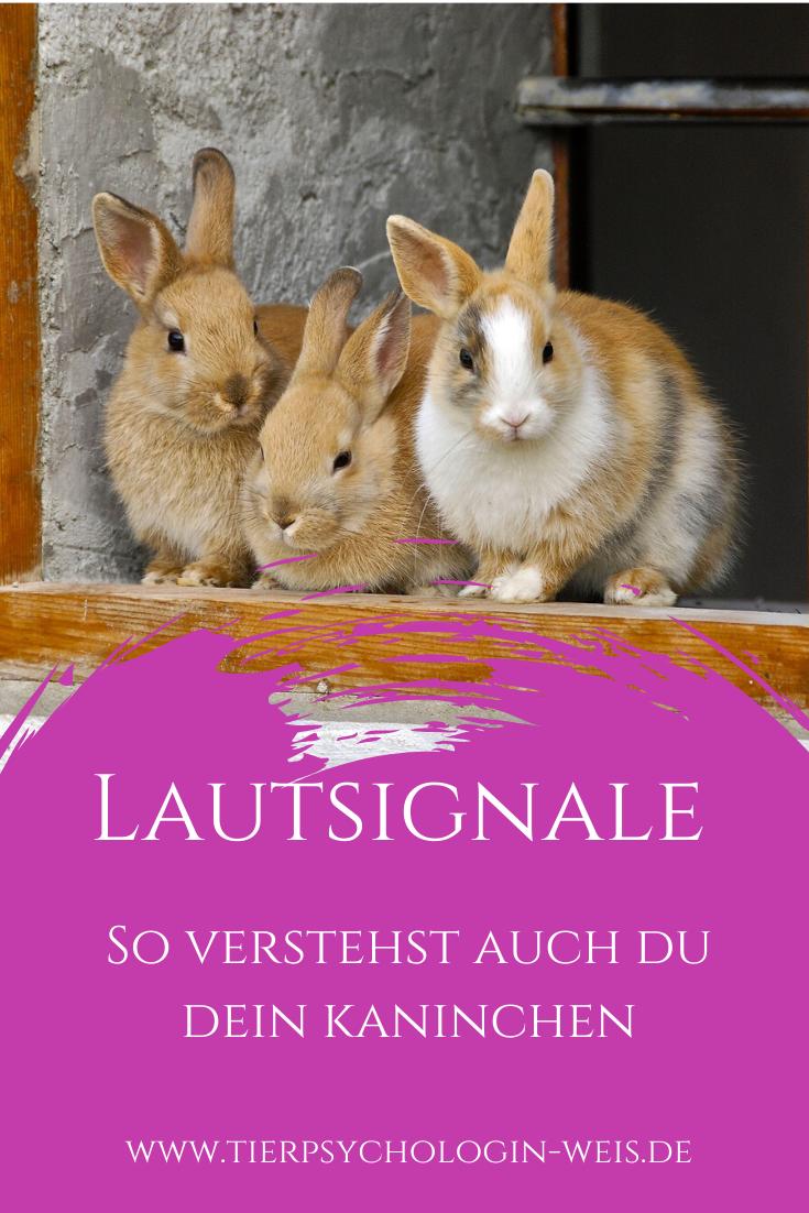 So Verstehst Auch Du Dein Kaninchen Kaninchen Kaninchen Verhalten Sozialverhalten