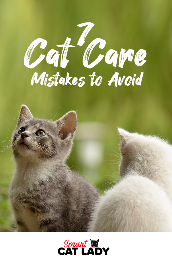7 Cat Care Mistakes To Avoid In 2020 Cat Training Litter Box Best Litter Box Cat Training