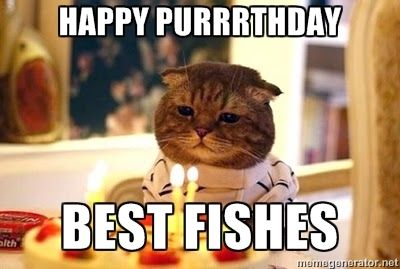 Funny Cat Meme Generator : Happy purrrthday best fishes birthday cat meme generator memes