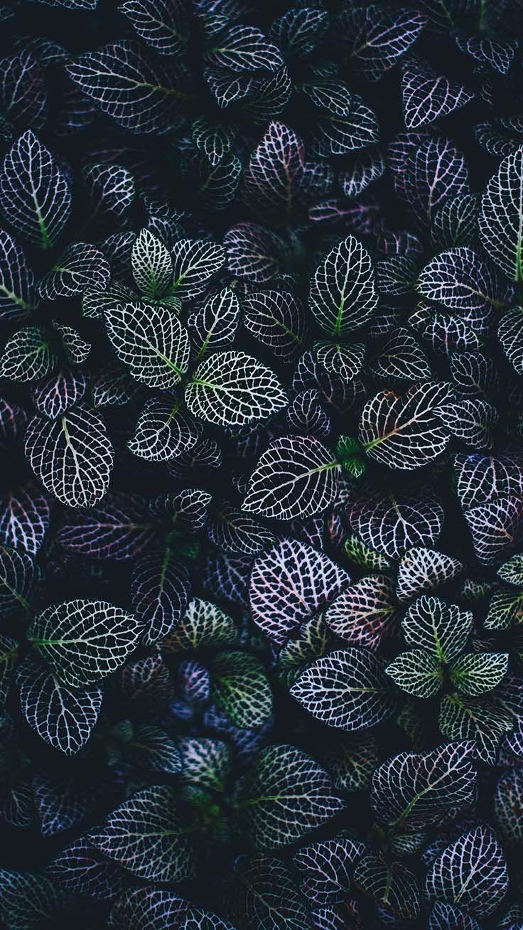 10 Super Pretty Iphone X Wallpapers Succulents Wallpaper