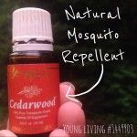 How+to+Repel+Bugs+with+Cedarwood