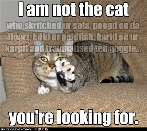 I Was Beginning 2 Think You D Never Ask Funny Cat Memes Funny Cat Photos Baby Animals Pictures