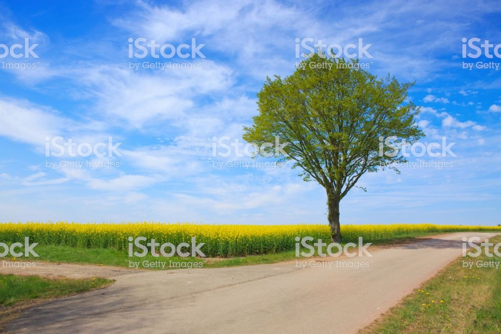 Spring landscape with green grass, road and tree  | garden