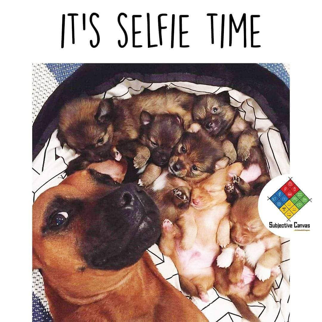 Its selife time WooF! WooF! . Follow @subjectivecanvas for