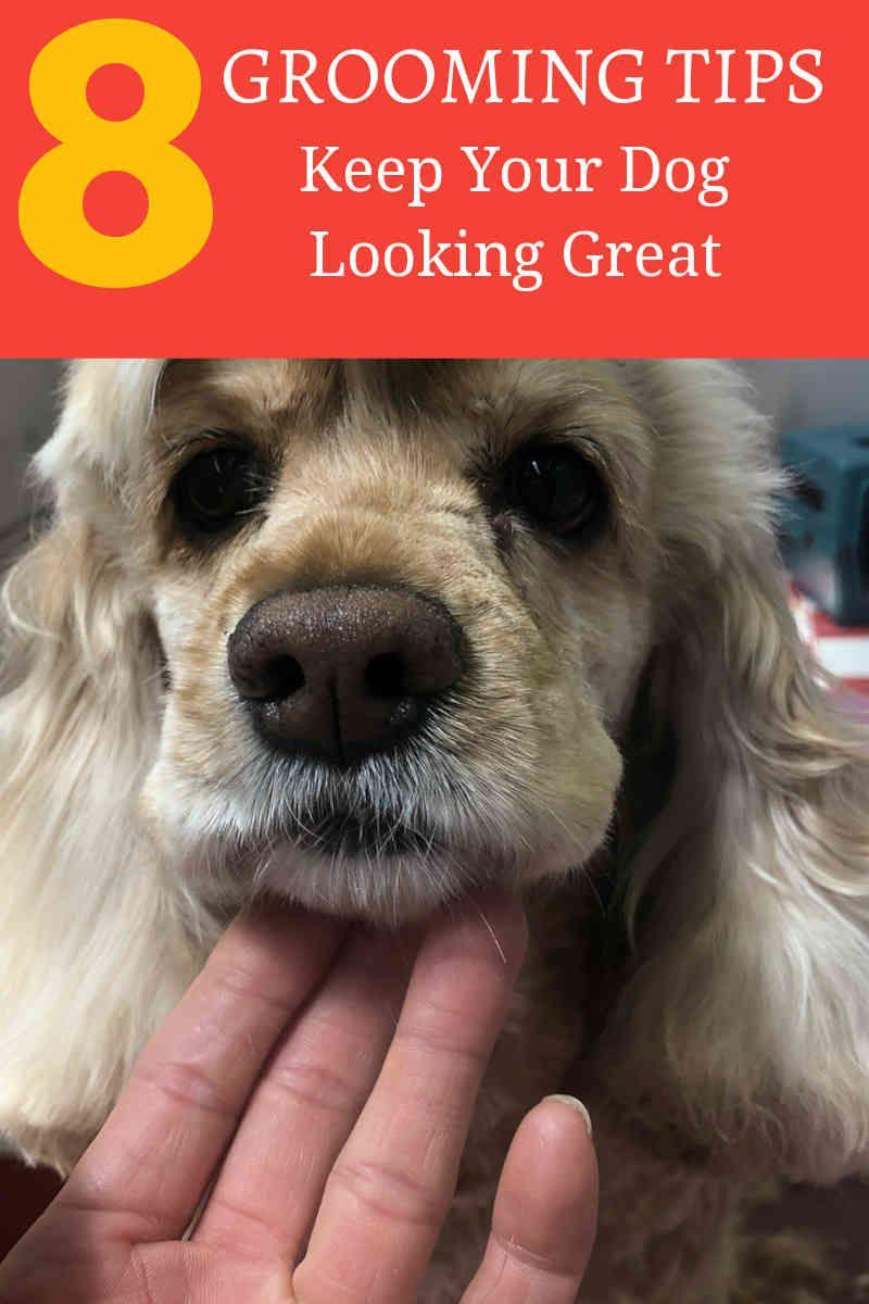 Pin On Dog Grooomers