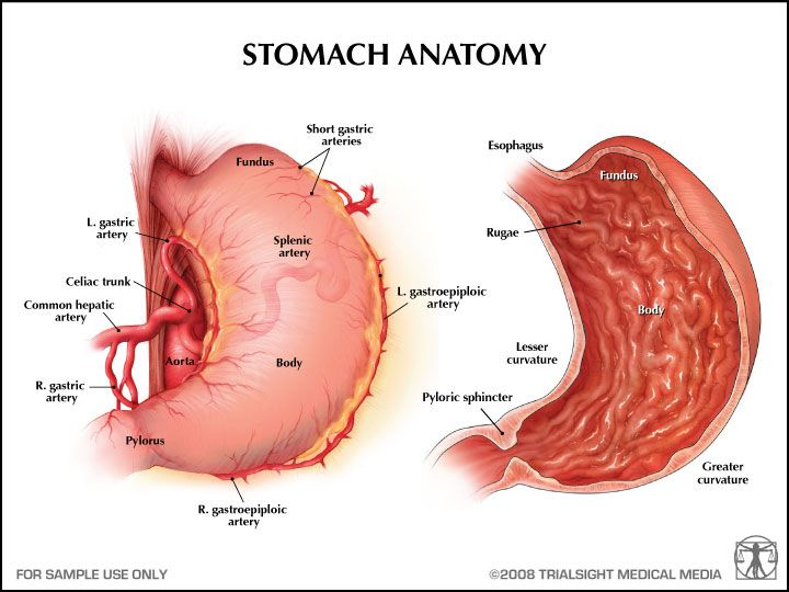 Stomach Anatomy Places To Visit Pinterest Health Wellness And Eat