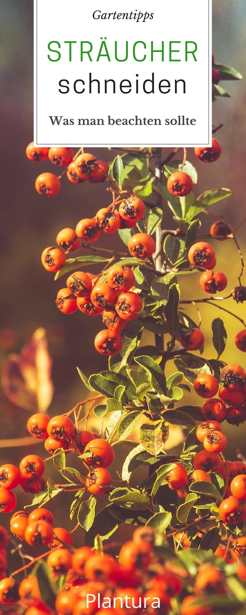 pflanzen schneiden hortensien obstb ume stauden und co schneiden gartenfreunde pinterest. Black Bedroom Furniture Sets. Home Design Ideas