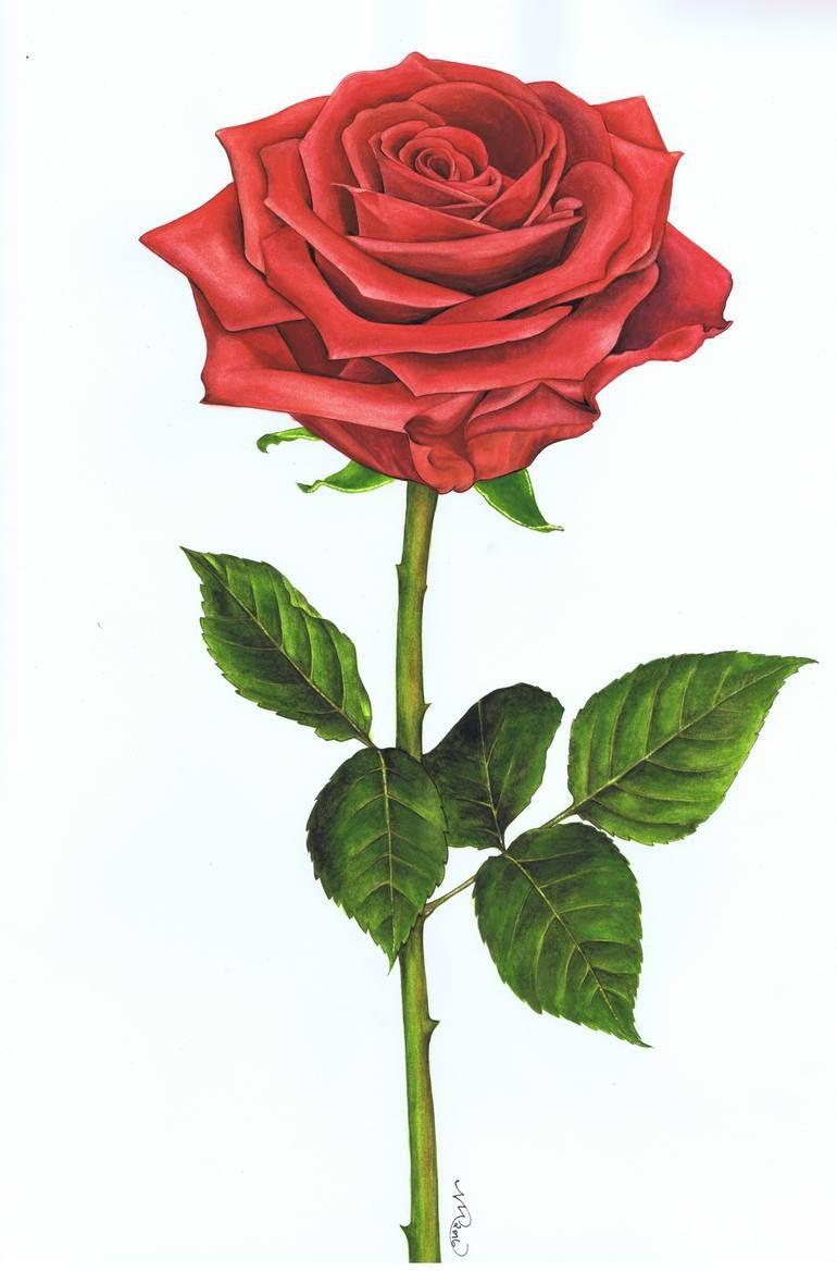 Single Rose 4 Painting In 2020 Rose Painting Red Rose Drawing Rose Art