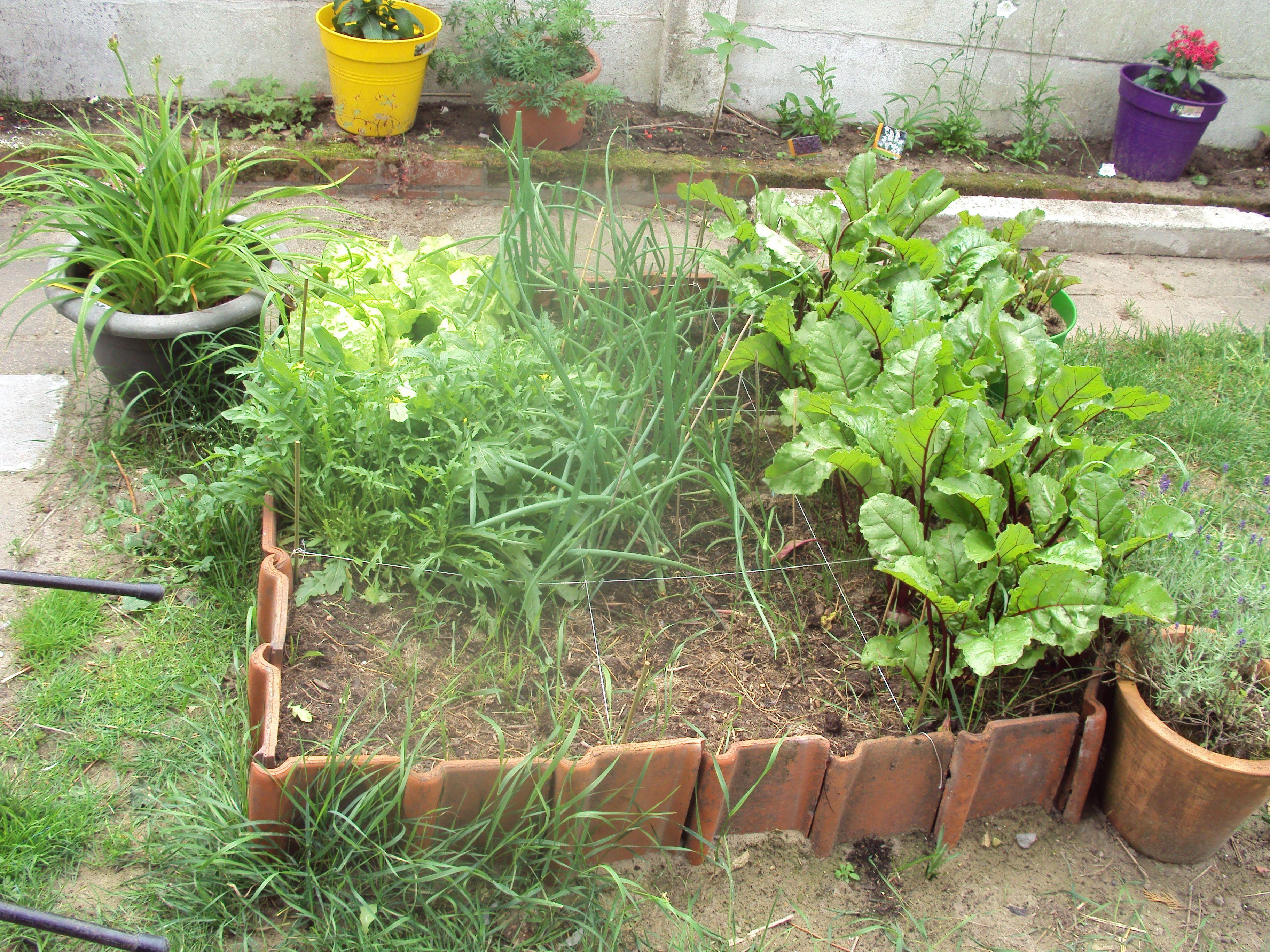 moestuin met border van dakpannen | tuin | pinterest | garden