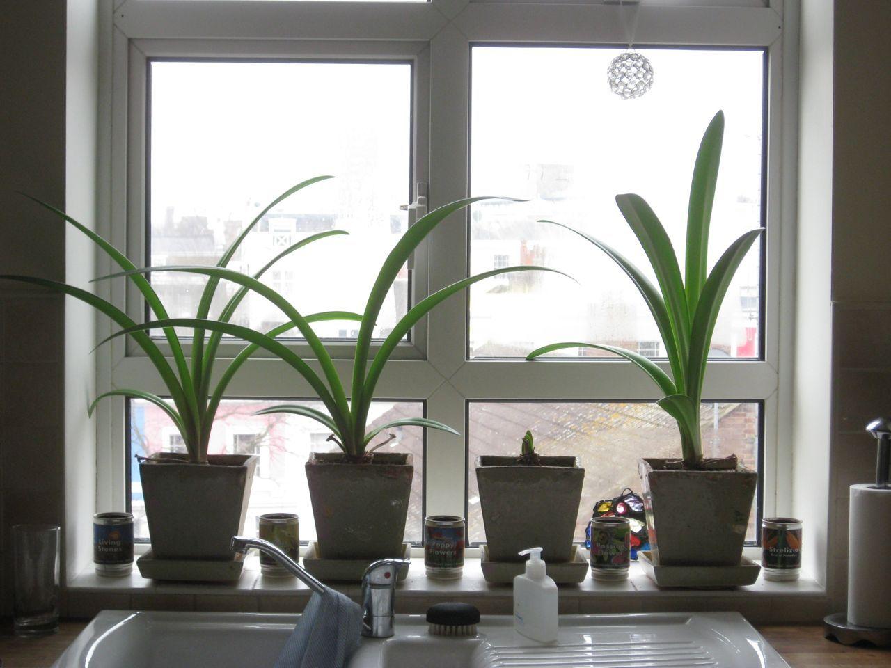 Indoor plants on windowsill indoor plants pinterest