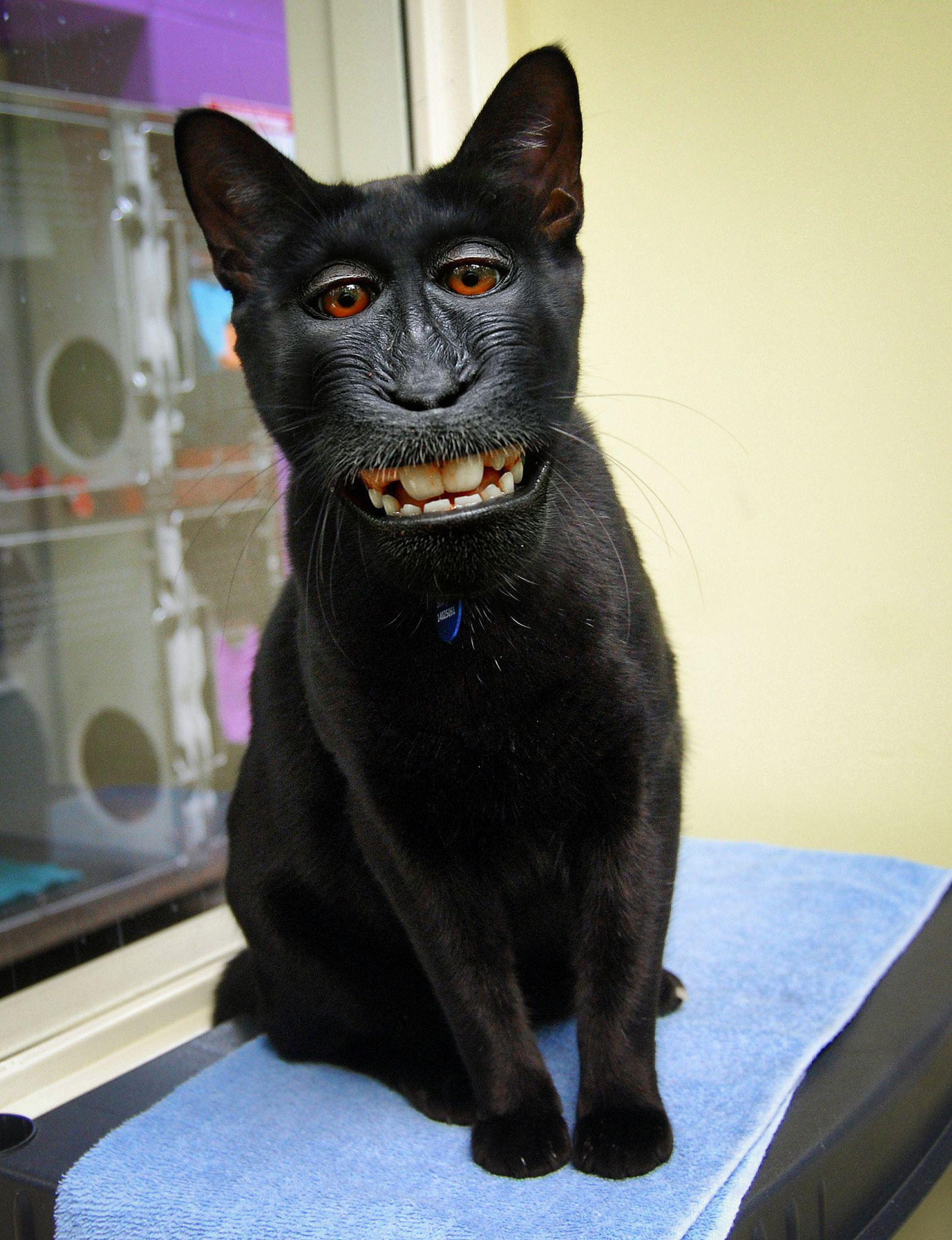 Happy Monkat! | Animal mashups, Creepy animals, Scary animals