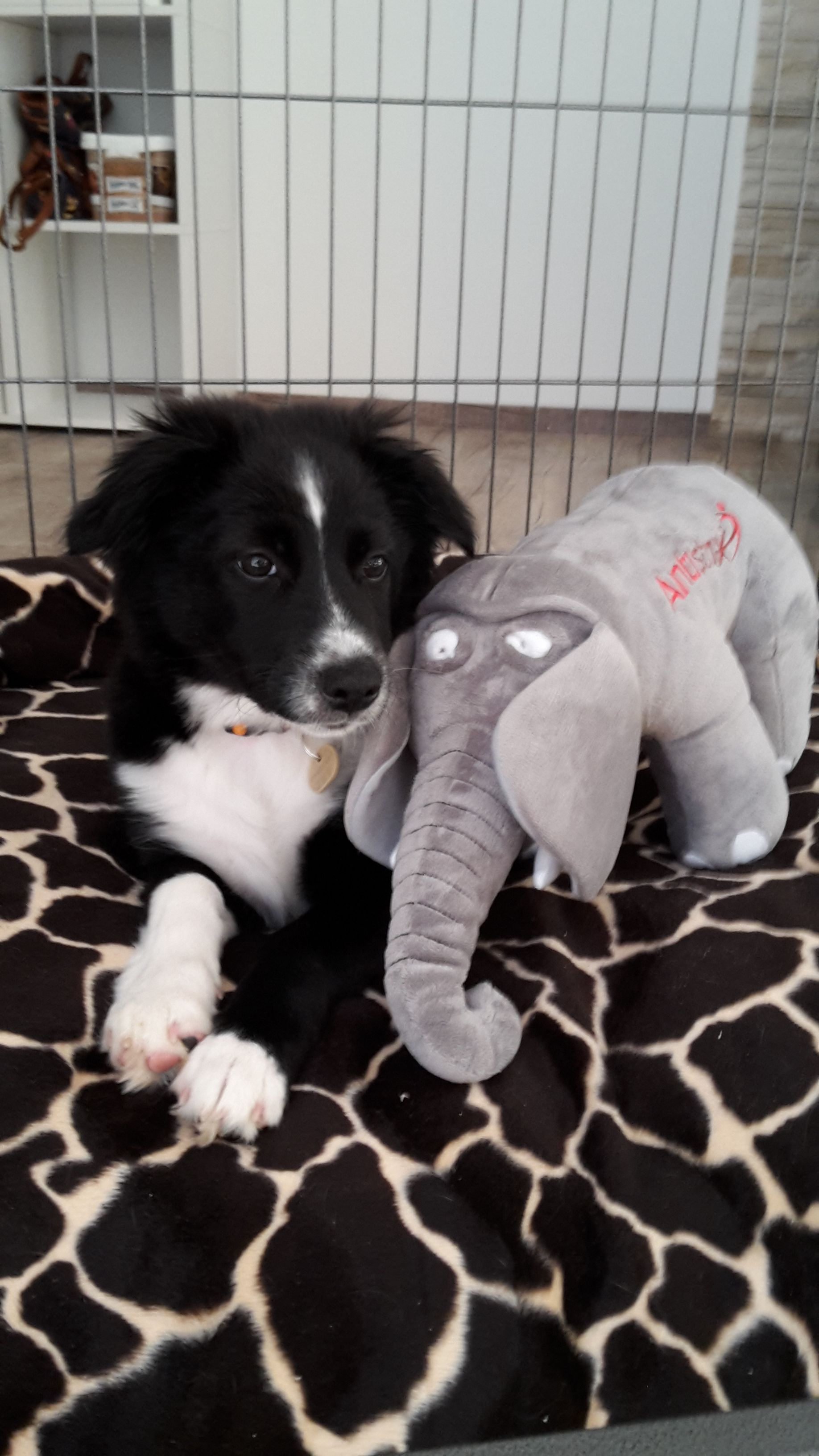 Hunde Foto: Julia und Akira - Fanti der Freund Hier Dein Bild hochladen: http://ichliebehunde.com/hund-des-tages  #hund #hunde #hundebild #hundebilder #dog #dogs #dogfun  #dogpic #dogpictures