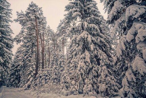 """Neuer Winterartikel. Bei den ersten Aufnahmen geht es mir darum, wieder ein """"Gefühl"""" für die Schnee-Belichtung zu bekommen, interessante """"Schneestrukturen"""" zusehen und das Spiel von Schatten und Licht im Schnee wieder zu erkennen. Zusätzlich bekommen die Fotos dann noch einen """"Märchenlook"""" verpasst. http://www.tobiasackermann.eu/vorbereitung-und-bildlook-im-winterwald/  #tobiasackermann  #landschaftsfotografie  #Winter  #Schwarzwald  #Schnee"""