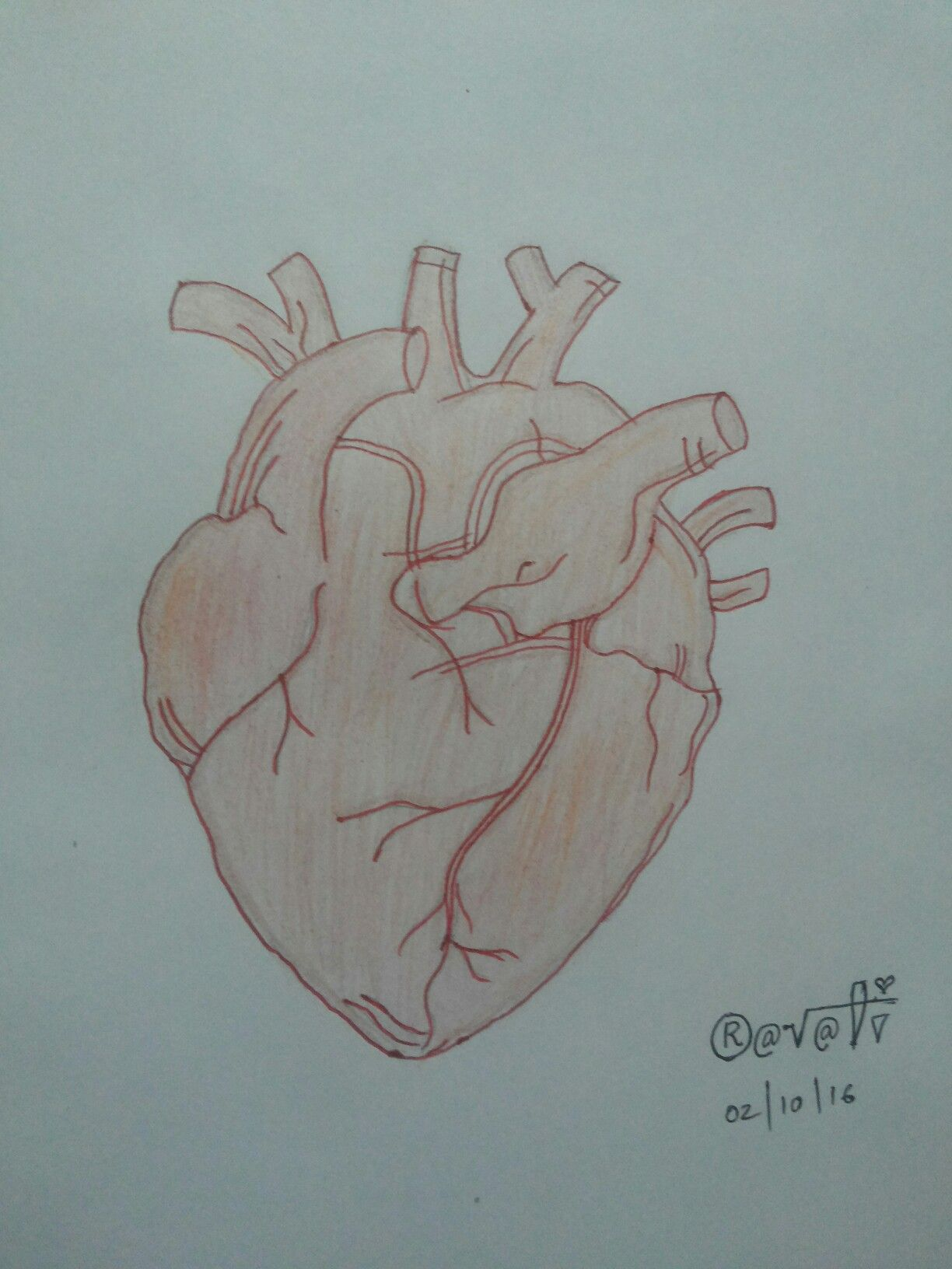 Human Heart Beat Loved Drawing It My Drawing Collections