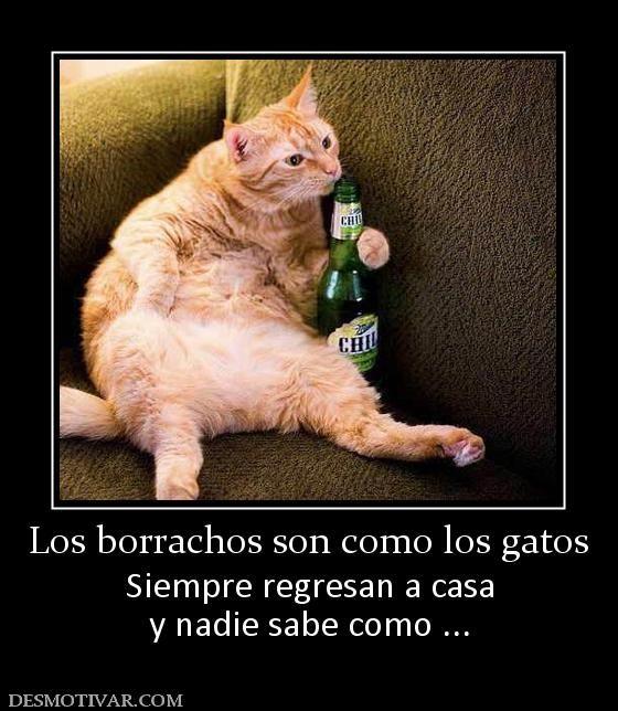 Los Borrachos Son Como Los Gatos Siempre Regresan A Casa Y Nadie Sabe Como Cats Cute Cats And Dogs Funny Animals