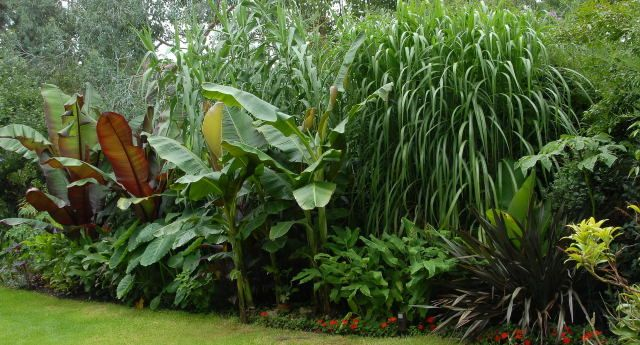 17 Best images about UK Tropical Hardy Plants – Plants Garden