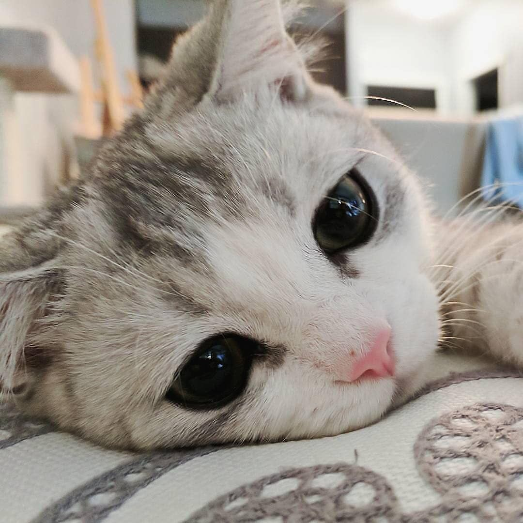 Cute Cats Of Instagram On Instagram Please Pet Me Submit Your Cat S Photo To Our Contest Email To Be Featured Cute Cats And Dogs Cute Cats Pretty Cats