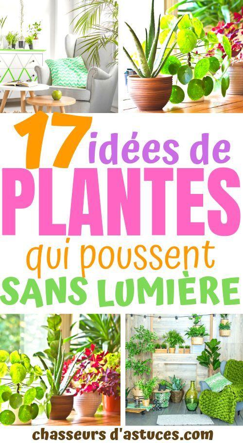 17 IDÉES DE PLANTES QUI POUSSENT SANS LUMIÈRE DU SOLEIL -   17 plants Interieur sans lumiere ideas