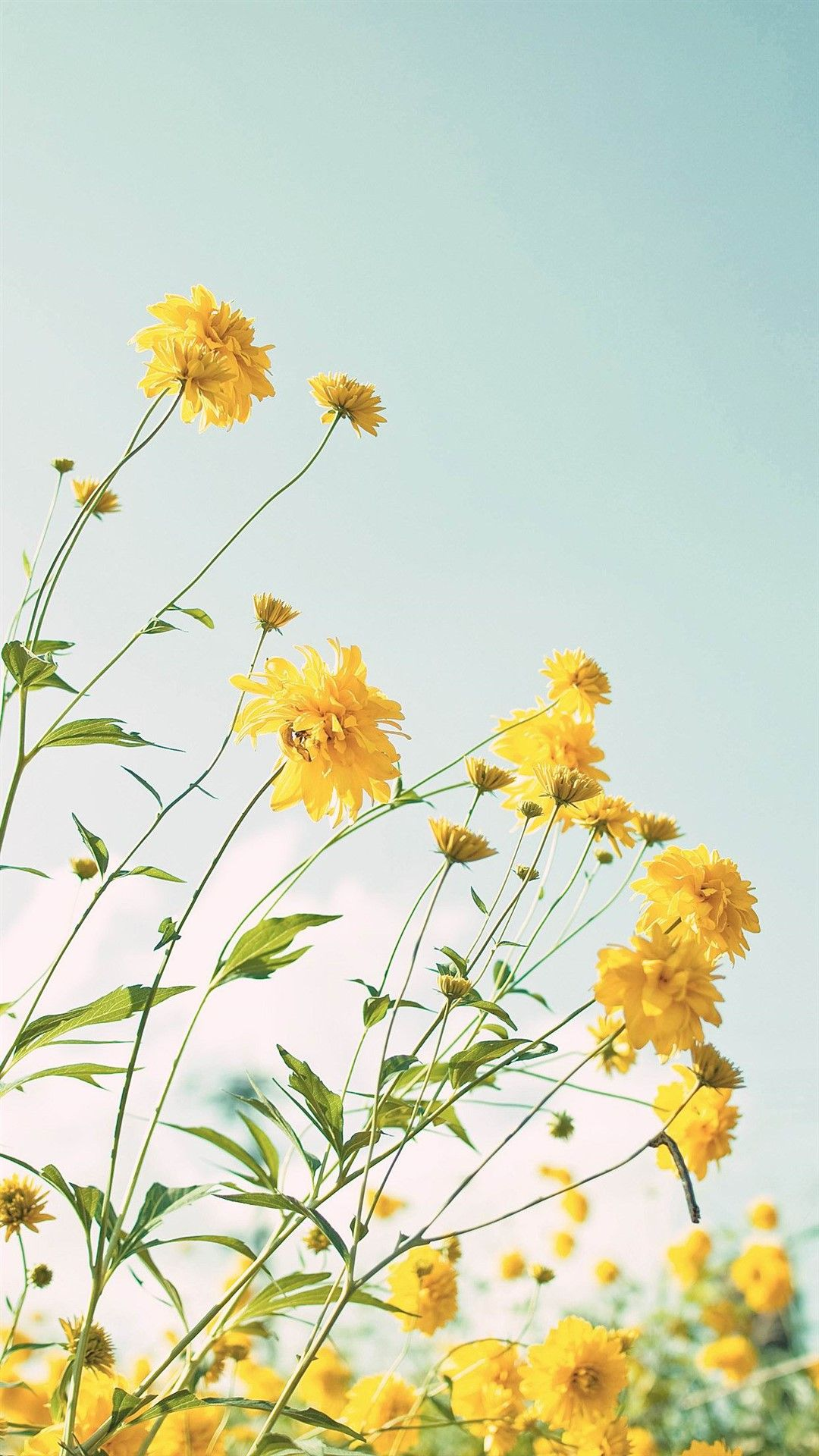 Yellow Flowers Wallpaper Flowers Photography Yellow Flowers Trendy Flowers