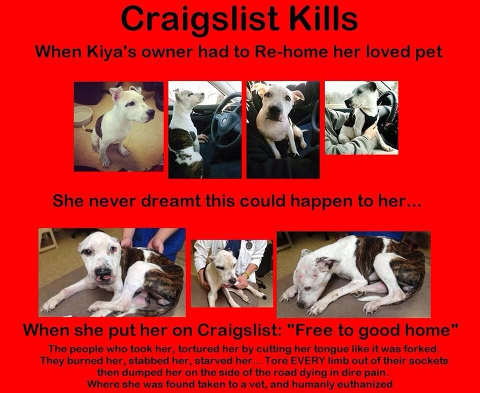 Free Dogs On Craigslist Google Search Animals Pets Love Pet