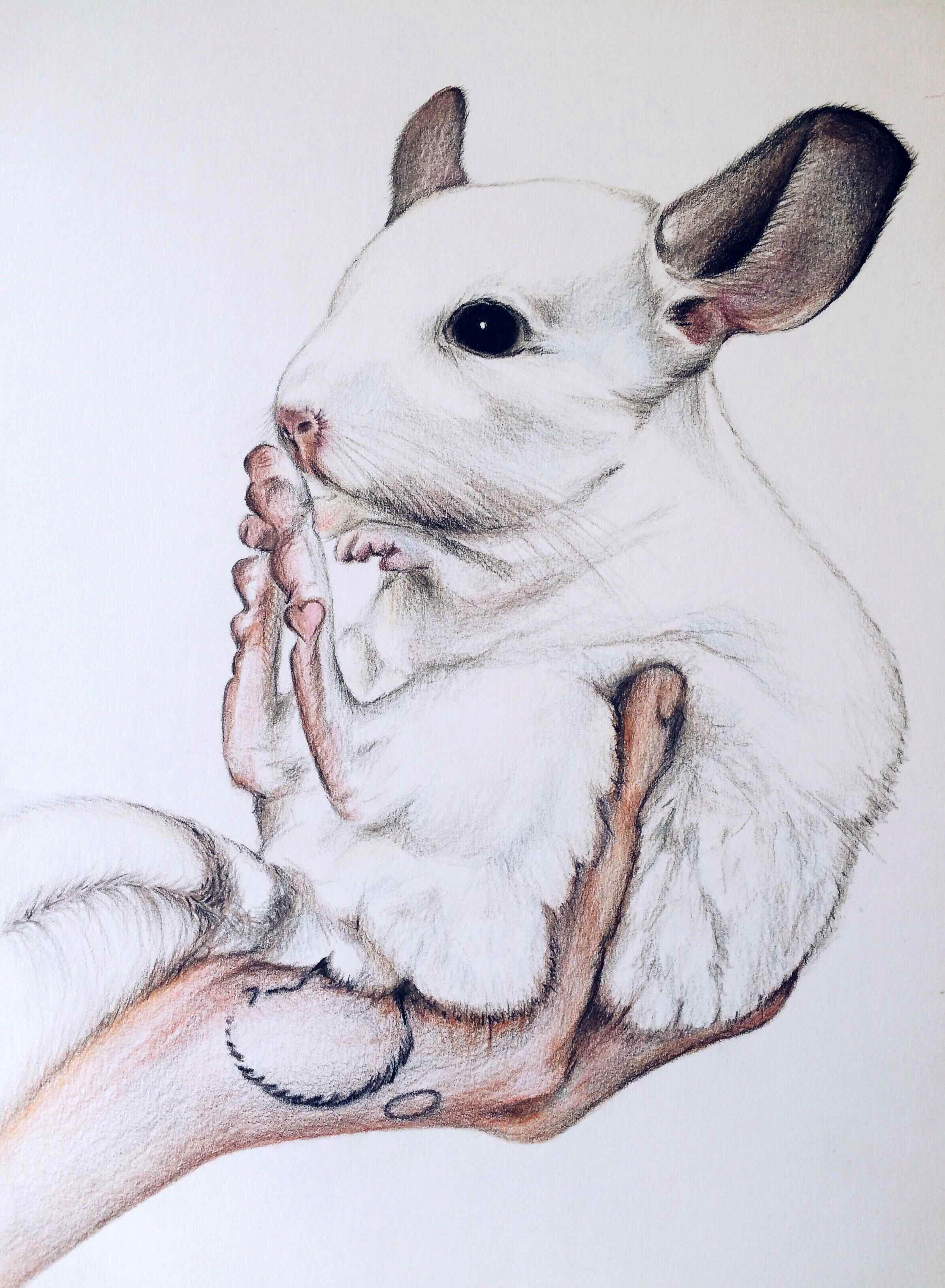 милые животные картинки карандашом возможный организатор предполагаемого