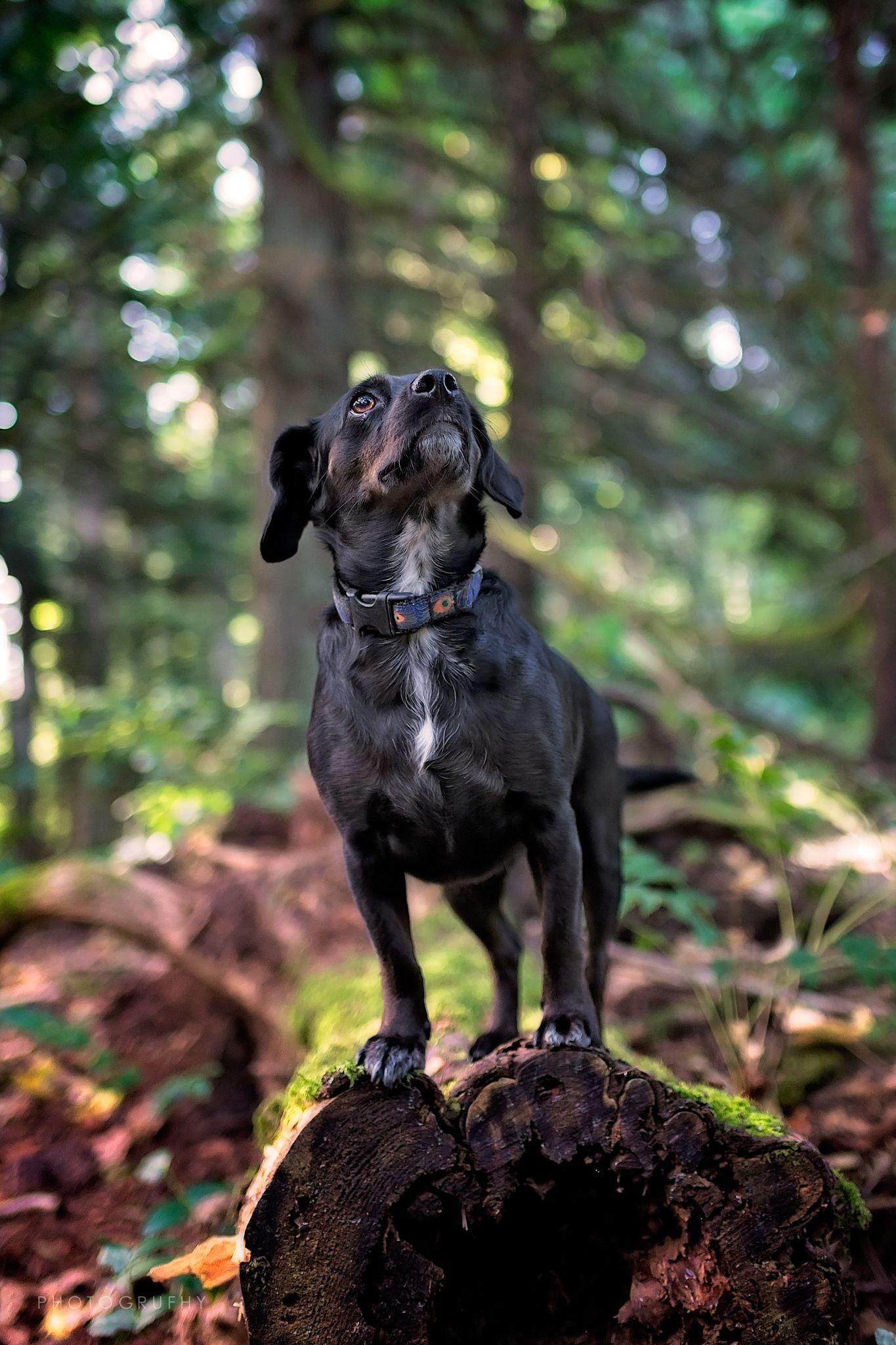Pin Pa Victoria Bc Dog Photographer Gord Rufh Dog Photography
