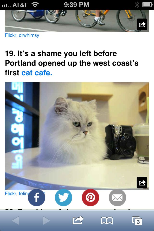 Why Did I Not Know About This Cat Cafe Cats Cat Lounge