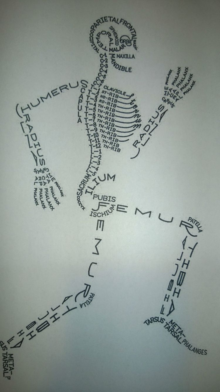 Skeleton Of Every Bone And The Name