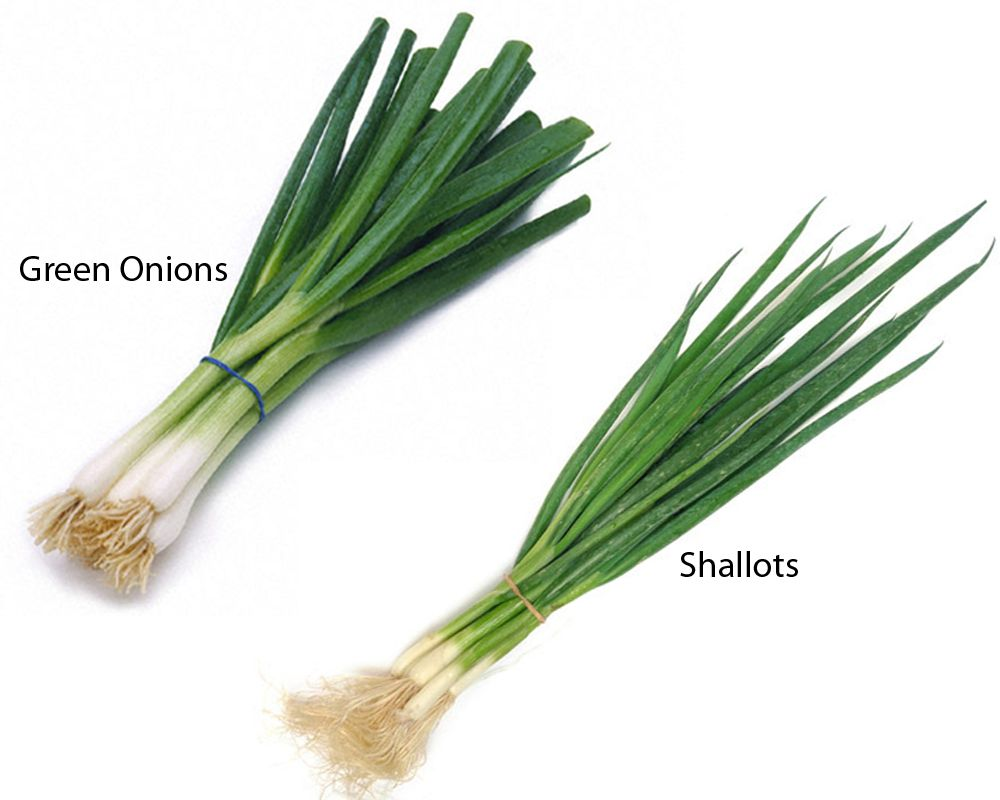 Despite The Similarities Green Onions And Shallots Have Different Properties And Are Used A Little Bit Differently From Each Othe Shallots Green Onions Onion