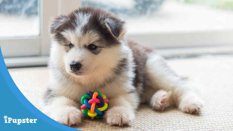 Best Toys For Puppies 2019 S Top Picks And Buyer S Guide In 2020 Puppy Plush Toys Toy Puppies Best Toys For Puppies