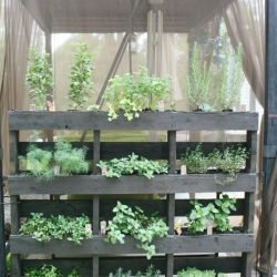 How to make a free-standing (vertical) pallet herb garden.
