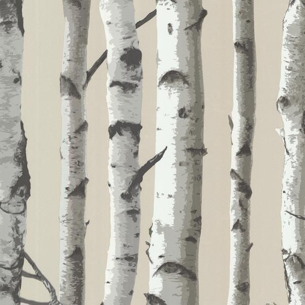 Irvin Grey Birch Tree Wallpaper Birch Tree Wallpaper Birch Tree Birch Tree Wallpaper Nursery