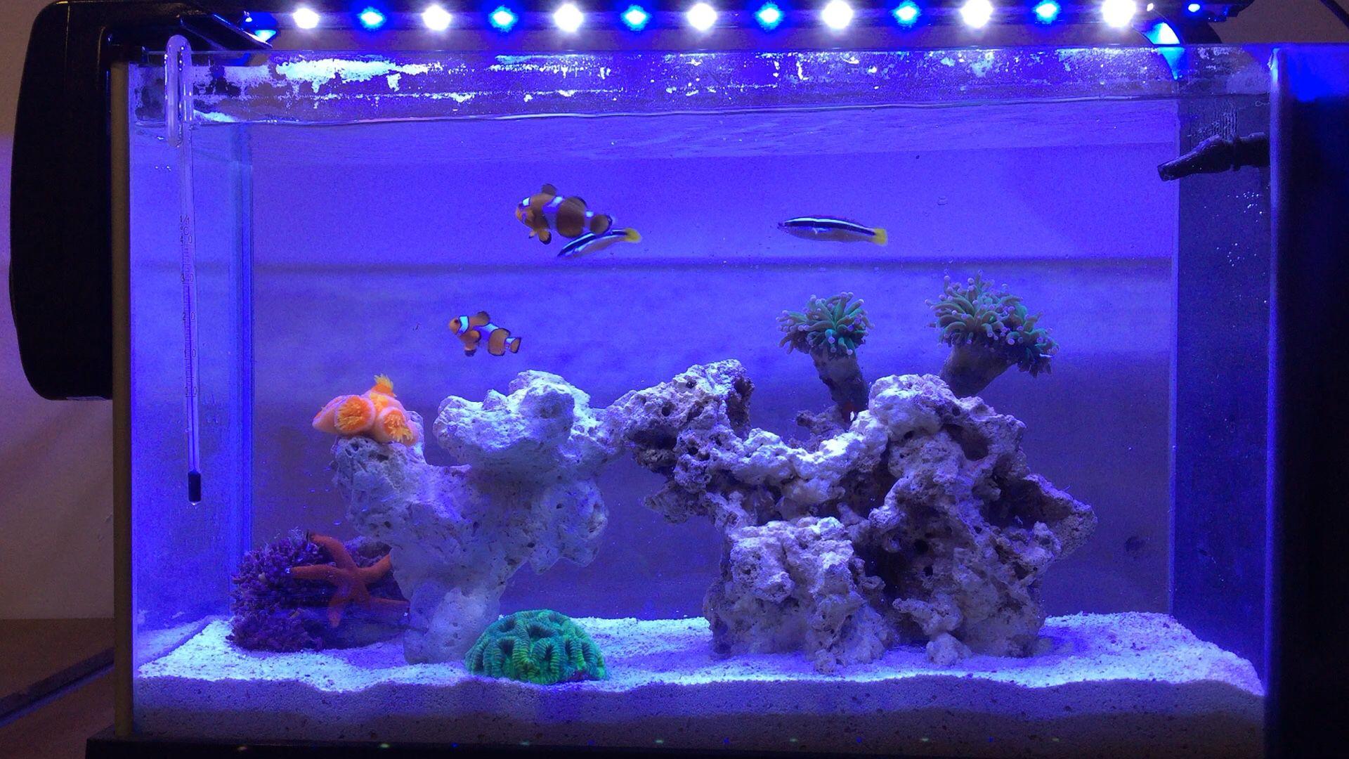 Fluval spec reef tank Fluval spec reef tank Pinterest