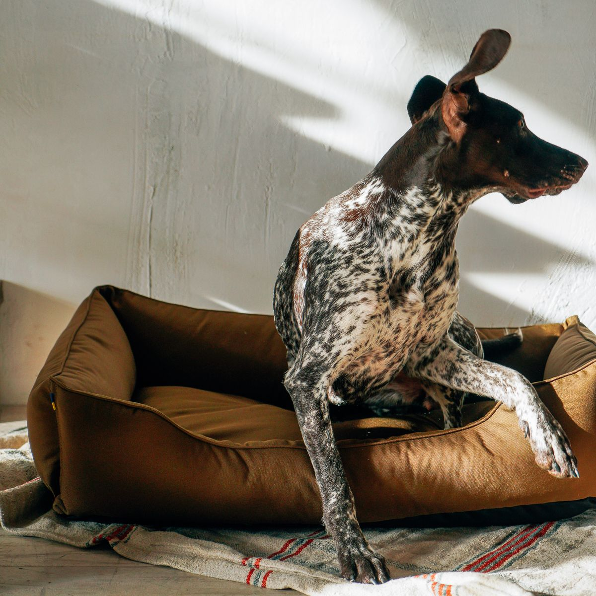 WATERPROOF dog bed for road trip / dog bed large / COYOTE